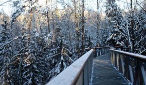 Medžių lajų takas – išskirtinė vieta